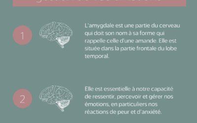 Le rôle de l'amygdale dans la gestion de nos émotions